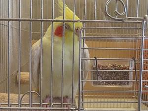 鳥さんの介護。