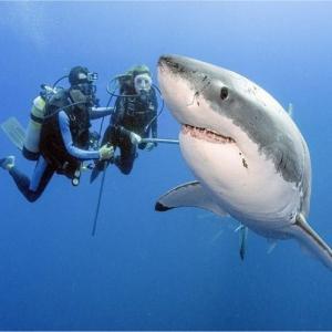 サメの意外性