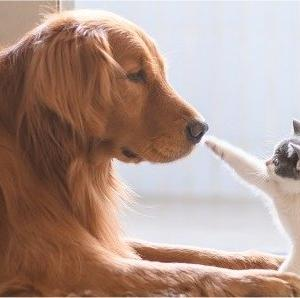 イヌとネコを共存させる