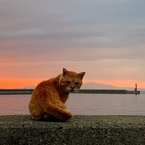 ベランダから海を眺めていると、防波堤の上に猫が!?タマなにしてるの?