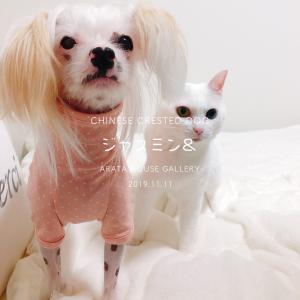 チャイクレは皮膚がデリケートなので体型を意識しながら犬服を製作しました