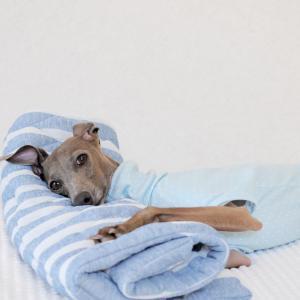 犬服ハンドメイド入門|ゼロからの犬服の作り方
