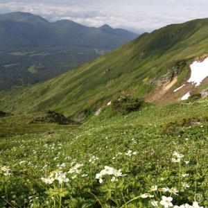 富良野岳 ~天空のお花畑とヒグマ遭遇!ヒグマに吠えられまくる~
