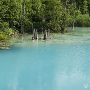 美瑛町_白金青い池 ~十勝岳連峰へ行ったらお立ち寄り!神秘的な美瑛ブルーの池へ~