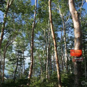 〔300名山〕奥茶臼山 ~最高の苔庭と倒木地獄!撤退しようかと思ったわ~