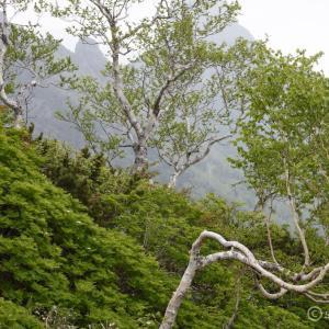 〔300名山〕ニセイカウシュッペ山 ~ガスガスだったけで楽しかった貸切登山~