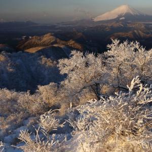 〔100名山〕丹沢塔ノ岳 ~千載一遇のチャンス到来!霧氷と朝焼け富士~