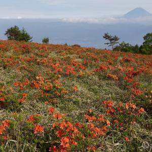 甘利山 ~夕方一瞬だけ日が差した富士山とレンゲツツジ~