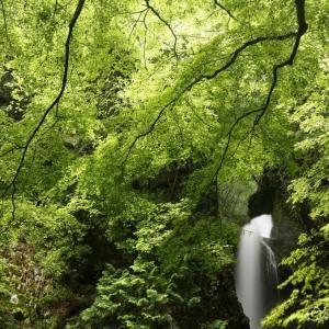 海沢渓谷 ~奥多摩の海沢三滝を行く(三ツ釜の滝/ネジレの滝/大滝)