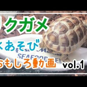 【リクガメ】水遊び面白動画♪2021年Vol.1