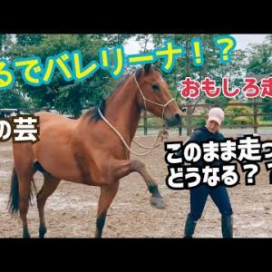 まるでバレリーナ!?馬のおもしろ走りww