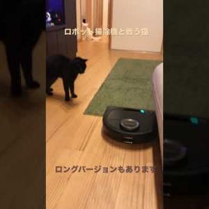 【おもしろ猫】ロボット掃除機と戦う猫ショートバージョン【funny cat】