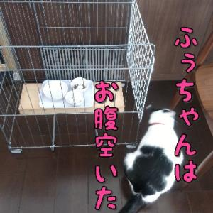 猫ダイエットチャレンジ