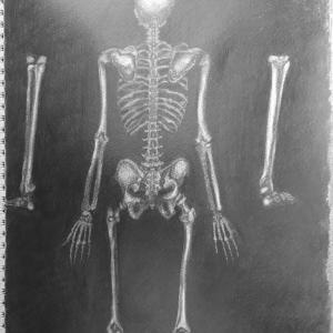 全身骨格背面