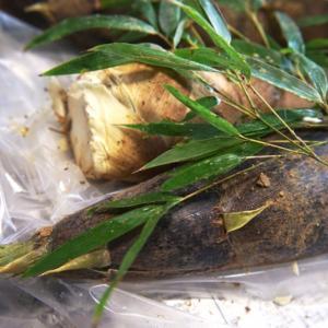 枚方市の杉山手にある自家栽培野菜を使った料亭「杉・五兵衛」さんに行って来た!