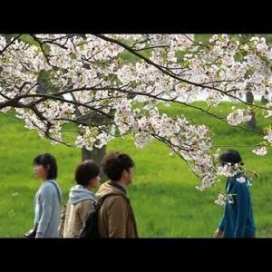 岩手の桜三景 -展勝地・盛岡城跡公園・髙松公園-