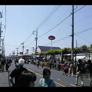 【春日部(かすかべ)藤まつり】日本一長い藤棚(総延長1.1km)