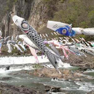 材木岩公園の鯉のぼり2017①宮城県観光名所 白石市