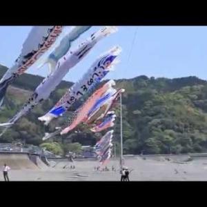 鯉のぼり2014