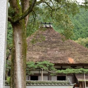 達身寺(兵庫県丹波市)のコスモスの写真
