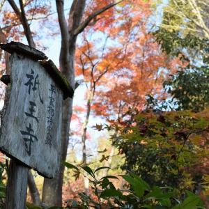 祇王寺(京都市)の写真と御朱印