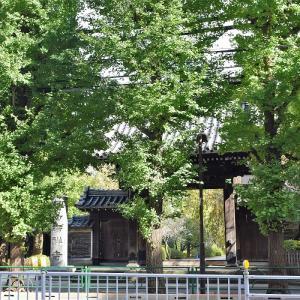 吉祥寺(東京都文京区)の写真と御朱印