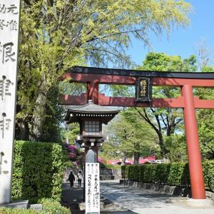 根津神社(東京都文京区)のツツジ写真①