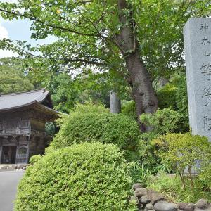 等覚院(神木不動尊)(神奈川県川崎市)の写真と御朱印①