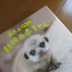 『世界のかわいい動物の赤ちゃん』(読書散歩1621)