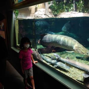 【リアルあつ森】キャンプ帰りに淡水魚水族館のアクア・トト ぎふへ【あつ森好き必見】