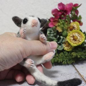 フクロモモンガの赤ちゃん