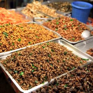 近い将来、昆虫食ブームが来るかも?