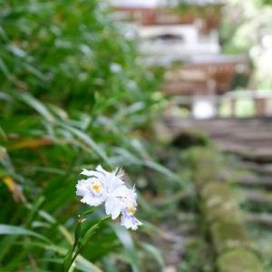 *:.鎌倉散歩~葛原岡・大仏ハイキング~【1】.:*