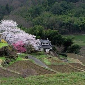 花見 2020 新型コロナで自粛しつつも桜を愛でたい!