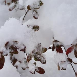 「綿菓子」のような雪が積もりました!!