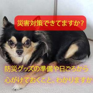 ペットの災害対策できてますか?愛犬/愛猫の必要な災害準備は?