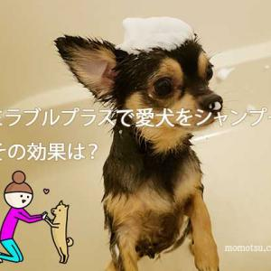 愛犬をミラブルプラスで洗ってみた!体臭や抜け毛は?本当の口コミ