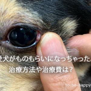 愛犬がものもらいに!? 治療方法や治療費、治療期間はどれくらい