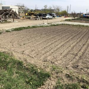 第2菜園定植開始とアスパラ収穫開始