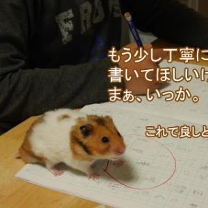 小学生の宿題を手伝うハムスター。