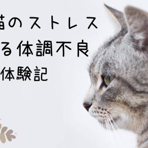 先住猫のストレスによる体調不良【体験談】