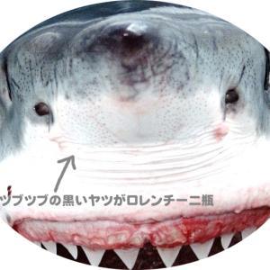 サメは愛でるもの!鼻先で手なづけられる