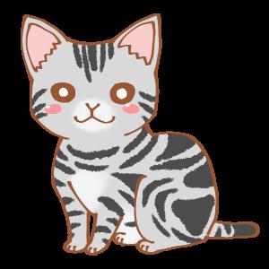 もかちゃん闘猫記