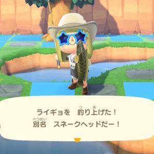 6月の虫と魚コンプ!