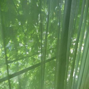 家の中から見た緑のカーテンはこんな見え方