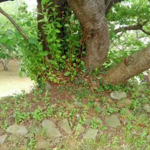 福姫日記 大島さくらの裏側