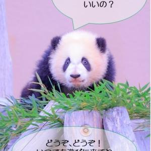 パンダの手も借りたい、笹の駆除と運動量