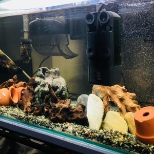 プレコの飼育環境の紹介です