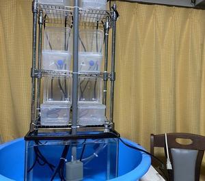 自作の、多段オーバーフロー集中濾過システムを作ってみた
