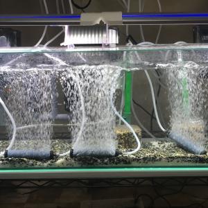 グッピーを1000匹飼育する為の水槽立ち上げました。笑